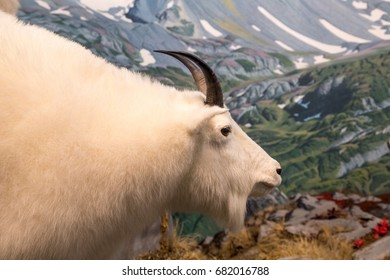 Horned White Ram Over Mountains