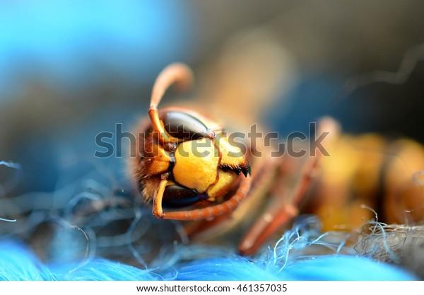 Hornet detail