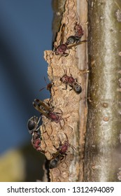 Hornet in nest on tree, close-up hornet in nature, animal in wild