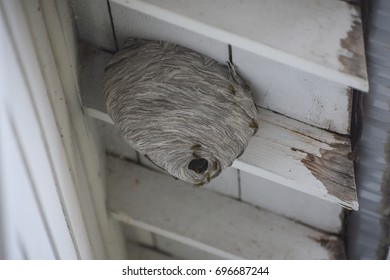 Hornet wasp nest under roof of old home with visible pests