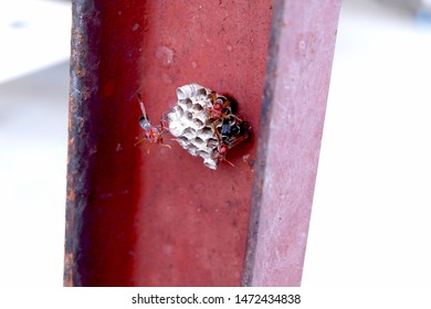 hornets build the hornet pupa on the steel