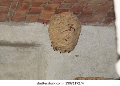 hornets nest attached to the ceiling