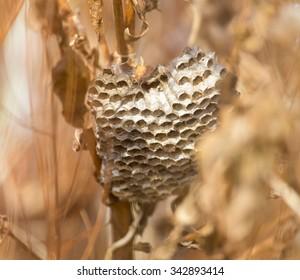 hornet's nest in the grass