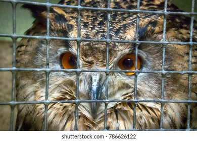 Horrible conditions of animals in little zoos of Asian. Eurasian eagle (Bubo bubo) is rare species of birds, powerful nocturnal predator behind bars, violence against nature concept, unnatural nature