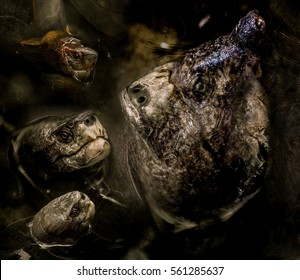 Horrible hallucination with aquatic turtle monster, imaginary creature, scary and creepy nightmare, frightening dream, surrealist painting, monstrosity and hell