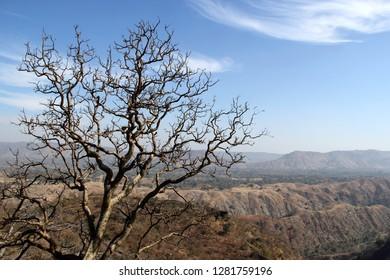 A horrifying dry tree standing against dry fields of aravali hills.