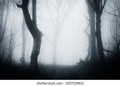 horror fantasy landscape, forest road with creepy old trees