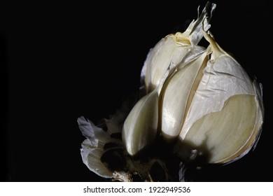 horror garlic closeup in lowlights light painting