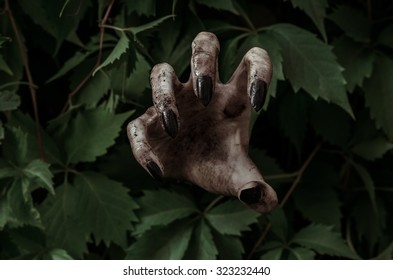 Horror and Halloween theme: terrible dirty hand with black fingernails zombie crawls out of the leaves, the walking dead apocalypse