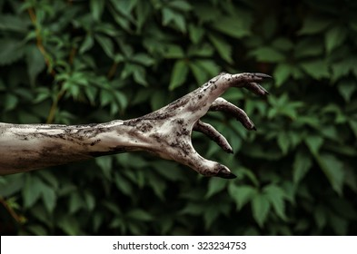 Horror and Halloween theme: Terrible zombie hands dirty with black nails reaches for green leaves, walking dead apocalypse