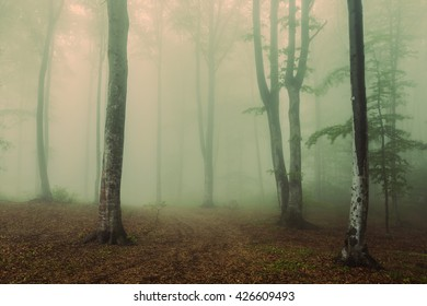 Horror scene into the foggy forest