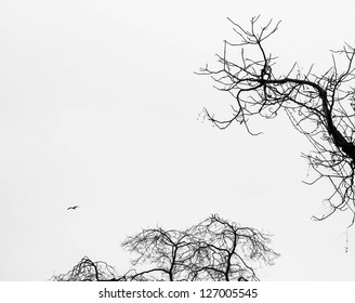 Horror or solitude background. Twigs and bird. Black and white. Aged photo.