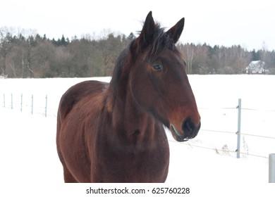 Horse - Shutterstock ID 625760228