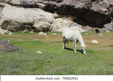 Horse - Shutterstock ID 740052961