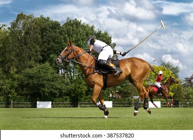 Horse in action at polo game