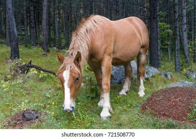Horse in Aiguestortes National Park, Vall de Boi, Lleida, Catalonia, Spain
