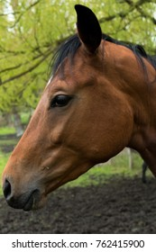 Horse, animal, mammal