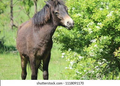 horse, animal wallpaper, horse background, nature, animal