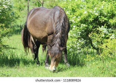 horse, animal, horse wallpaper, grass, nature, horse background