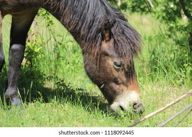horse, animal, horse wallpaper, texture, nature, brown horse