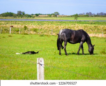 A horse and its baby sleeping on the grass in the pampa biome - Uruguaiana, Brazil