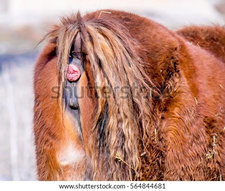 Photo of an anus