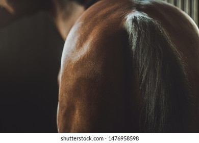 Horse Back and Tail in a Barn. Horse Riding Theme.
