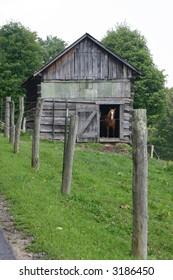 Horse in Barn