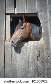 Horse in barn window, Northern California