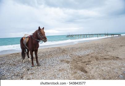 horse in the beach