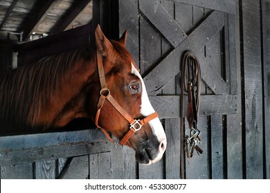 A horse with beautiful eyes stares off into the distance. Could be a sad lonely horse.