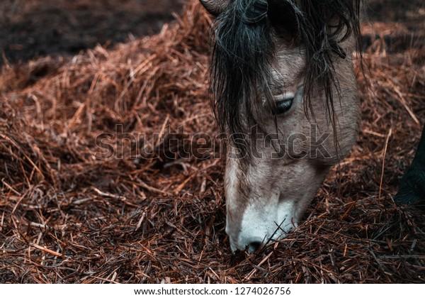 Horse Beauty Horses Pony Wild Big Stock Photo (Edit Now