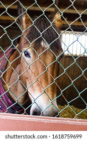 horse behind a fence in stall