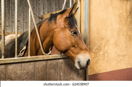 Horse behind stable door metal bars looking out