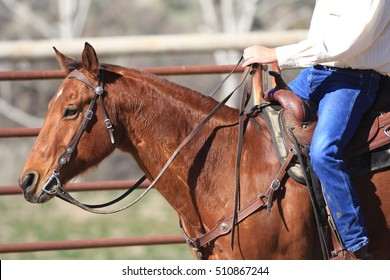 A horse being trained by a cowboy in a round pen.