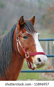 Horse With Blaze Face