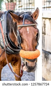 Horse with blinders on the eye harnessed to a carriage