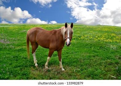 horse blonde mane meadow