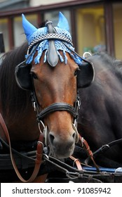 horse with a blue cap