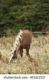 horse with braids  in a field of chamomile