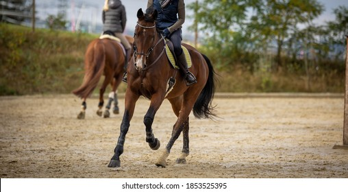 Horse Braun galloping with rider on the riding arena, photographed from the front. - Shutterstock ID 1853525395