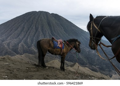 Horse in Bromo Mountain, East Java