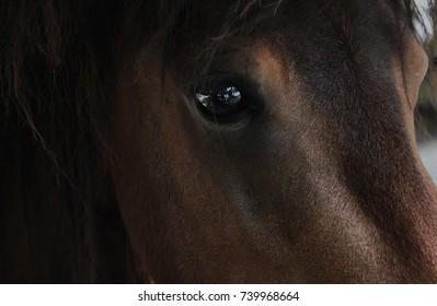 Horse brown eye close up animal portrait photo