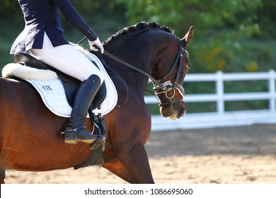 Horse brown in portraits during a dressage test, taken from diagonally behind in the neck in a gallop.