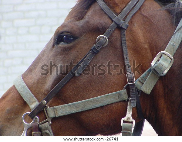 Horse with buggy harness