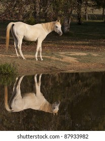 Horse by Pond