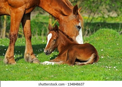 A Horse With Calf In The Pasture