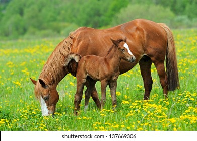 A horse with a calf in the pasture