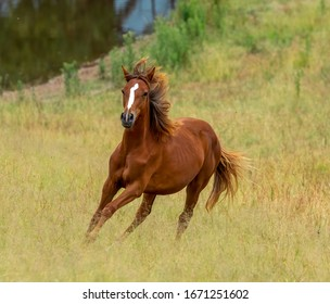 Horse cantering around the field
