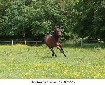 A horse canters through a meadow of wild flowers